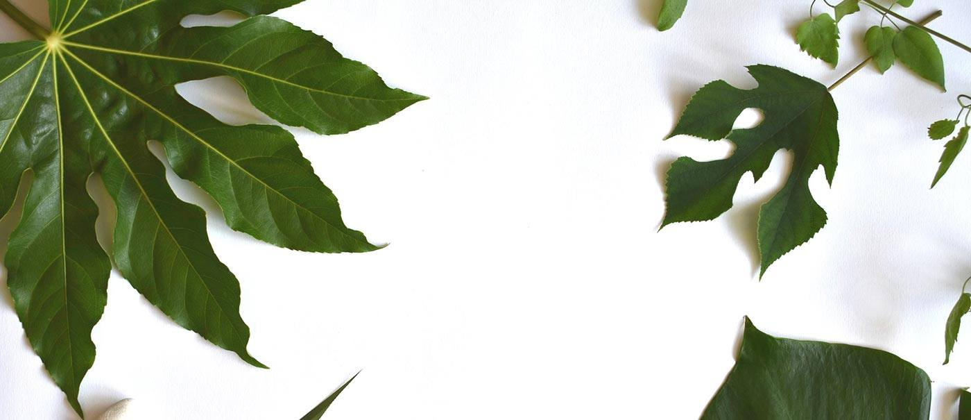 leaves and white space to illustrate blog 7 tips to make the most of your website
